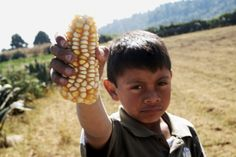 STOP MONSANTO Monsanto's lawyers just convinced a judge to overturn Mexico's ban on planting GMO corn -- threatening an 8,000-year-old farming tradition. Will you chip in to help Mexico's farmers stand up to Monsanto?