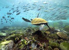 Fondali marini delle Galapagos-Viaggio di nozze.