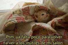 Kittens Cutest, Cute Cats, Weird Text, I Love School, Sad Cat, Spanish Memes, New Memes, Reaction Pictures, South Park