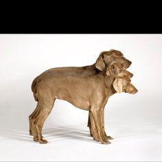 You complete me. Weimaraner, Vizsla, William Wegman, Photograph Video, Going To California, I Love Girls, Equine Photography, Four Legged, Dog Love