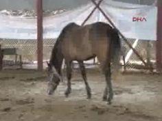 Adana'da 22 at 'kebap' olmaktan kurtarıldı