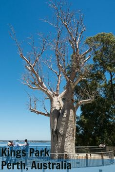 Photo tour of Botanic Gardens in King's Park, Perth Australial.