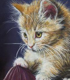 Kitten   Pastellum