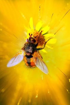 Bee on a Bright Yellow Flower
