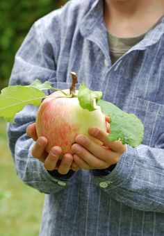 Apple Orchard Farm