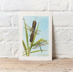 #pretty #dragonfly signed, limited edition print @OxenhamA #Leominster #Hereford #art #gallery #wings #countryside