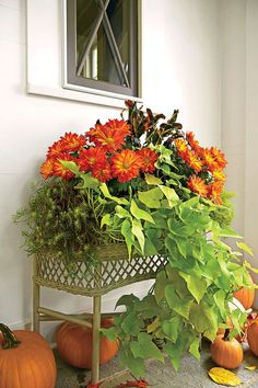 This vintage wicker planter, snagged at a flea market, overflows with mums and foliage. For another amazing look, try these plants in a window box.     How To Make it: Versatile Fall Container
