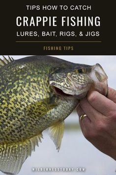 43 Crappie Fishing Ideas The way to Catch White  amp  Black Crappie with Lures Bait Rigs and Jigs