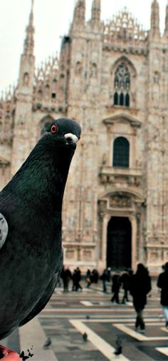 Pigeon's selfie in Milano, Italy Lombardy...too funny!
