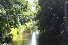Along the Basingstoke canal