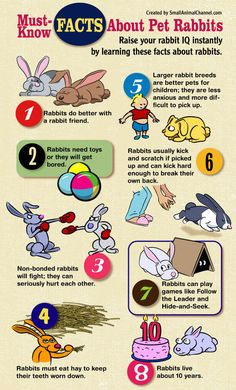 infographic listing eight must-know facts about pet rabbits