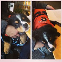 Puppy in Syracuse colors. Two of my favorite things : )