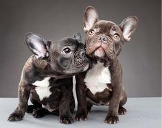 perritos lindos