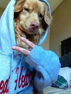 Hilarious Selfies - This is possibly the, if not THE best selfie I've ever seen. I dunno how the owner did it but it's legit #selfie #dog #goldenretriever