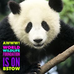 World Wildlife Foundation is on Bstow!