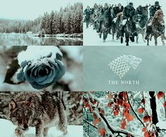 North Winterfell Wolf Blue Rose Night's Watch