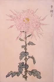 Excited lion, One Hundred Chrysanthemums by Keika Hasegawa Japanese Drawings, Japanese Art, Botanical Drawings, Botanical Illustration, Asian Art, Flower Art, Still Life, Chrysanthemums, Artist