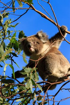 Pat Gower Photography Blog: Australia - week 2 - Ocean Road and Grampians