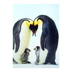"""Our Emperor Penguin Family Magnet is a wonderful and touching image that's 2"""" x 3"""" and encased in a very solid plastic frame with a very secure one inch square magnet in the back. Penguin perfect for"""
