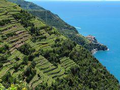 Park of Cinque Terre