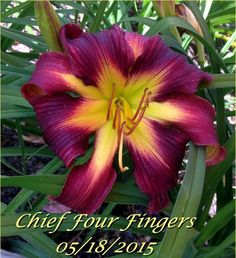 Chief Four Fingers