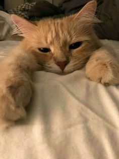Here are some common behaviors your cat is likely to exhibit, and what it probably means when he's doing them. 7 Ways To Read Your Cat's Mood Cute Baby Cats, Cute Kittens, Cute Baby Animals, Cats And Kittens, Funny Animals, Sleepy Animals, Cats Meowing, Tabby Cats, Bb Chat
