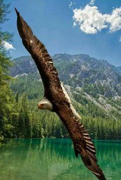 9Si levantara el vuelo hacia el sol naciente, o si habitara en los confines del mar, 10aun allí tu mano me sostendría; ¡tu mano derecha no me soltaría.  Salmo 139:9-10