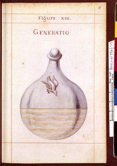 Figura XIII - Generatio - Sapientia veterum philosophorum, sive doctrina eorumdem de summa et universali medicina 40 hierogliphis explicata