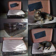 Une ancienne valise, du tissu, un coussin, un chat et... et... un panier à chat