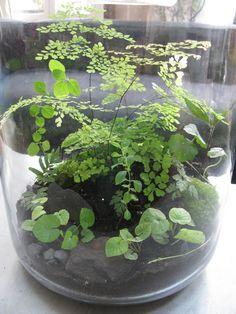 Terrarium by Kali Vermès (from Grow Little)
