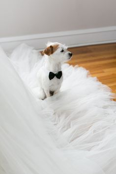 Lookin out for the bride's dress | http://www.weddingpartyapp.com/blog/2014/08/29/dogs-at-weddings-35-furry-friends/