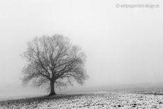 Nebulös ;-) ... Novemberwetter, Novembernebel, Eiche ohne Blätterkleid // © wildeschoenheiten.wordpress.com