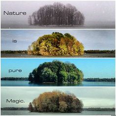 Nature Is Pure Magic ~ 4 seasons