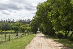 Tamar Valley wine region, Tasmania