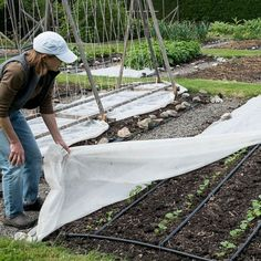 How to grow veggies in cold weather
