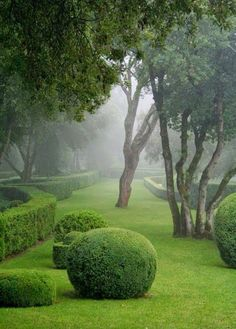 View of fog in garden somewhere in the world | Backyards Click