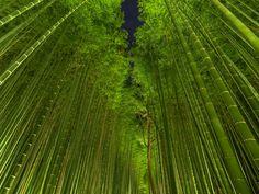 Night bamboo by Ryusuke Komori on 500px
