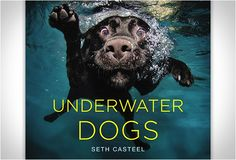 Any book about dogs is always worth browsing - UNDERWATER DOGS | BY SETH CASTEEL