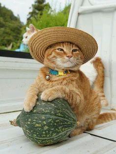 Adorable farmer