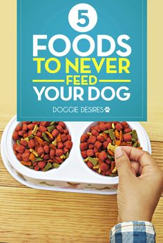 5 foods to NEVER feed your dog >> http://doggiedesires.com/foods-to-never-feed-your-dog/