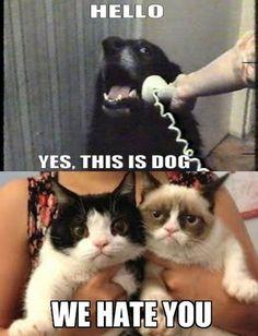Grumpy Cat has a friend in crime