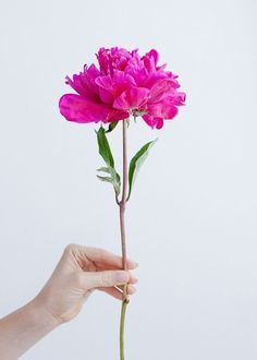 peony for you | ban.do