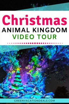 Visting Animal Kingdom at Christmas? Or just want to enjoy a virtual tour of Disney World at Christmas time? You'll love this video tour! Enjoy holiday decorations, beautiful projections on the Tree of Life, character meet Christmas Events, Christmas Travel, Christmas Vacation, Disney Christmas, Holiday Travel, Christmas Holiday, Disney Resorts, Disney Vacations, Disney Trips