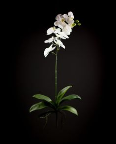 Fiore artificiale Orchidea Phalaenopsis con foglia