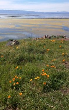 Hills and Salt Ponds at Coyote Hills Regional Park, Fremont, California