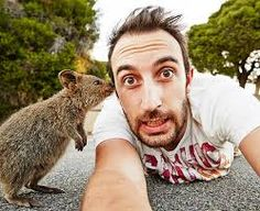 'Don't let Allan Dixon know about this Selfie between us. He might get jealous' - Adorable Little Quokka Baby Funny Baby Pictures, Baby Animals Pictures, Cute Wild Animals, Happy Animals, Quokka Baby, Duck Or Rabbit, Kangaroo, Cats, Selfies