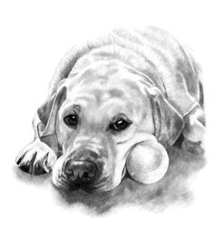 Pet Portrait Custom Hand Drawn Pencil Pet Memorial Gifts for Her Dog Art Dog Dad Pet Loss Wall Art - Лабрадор - Animal Sketches, Animal Drawings, Drawing Sketches, Pencil Drawings, Art Drawings, Charcoal Drawings, Pencil Drawing Tutorials, Drawing Ideas, Pet Memorial Gifts