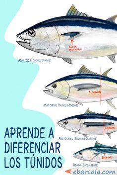 Distingue los principales atunes. Es fácil. #atunes #tuna Sashimi, Wicked, Fish, Map, Sketchbooks, Fishing, Animales, Illustrations, Pisces
