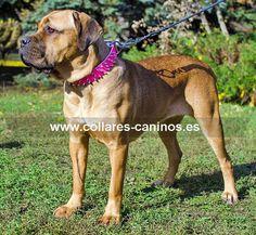 Collar de pinchos de acero cromado en cuero rosado para perros grandes y fuertes Cane Corso - S44P