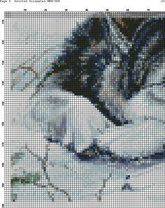 Волки 1(4)